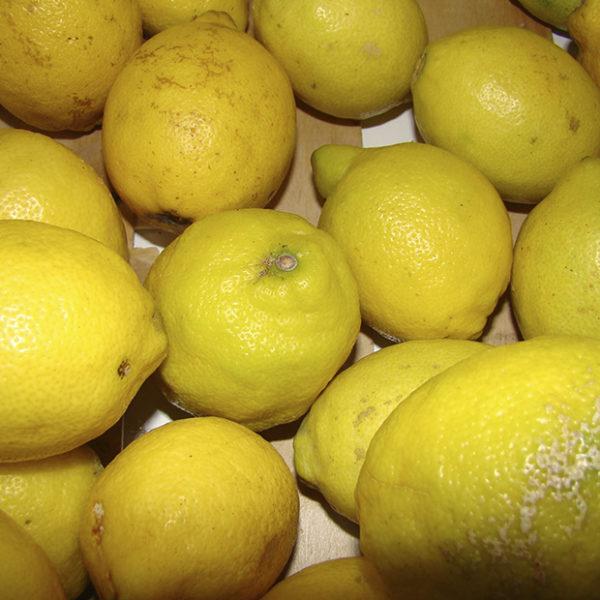 Citrons jaunes bio