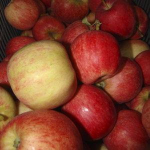 Pommes Gala bio